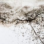 Black mold on a white wall in the house.